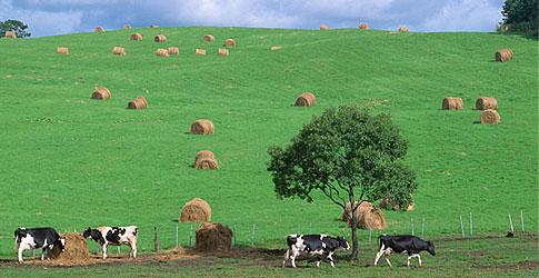 北海道農業信用基金協会 北海道農業信用基金協会 関連リンク集 サイトマップ 個人情報保護方針 H